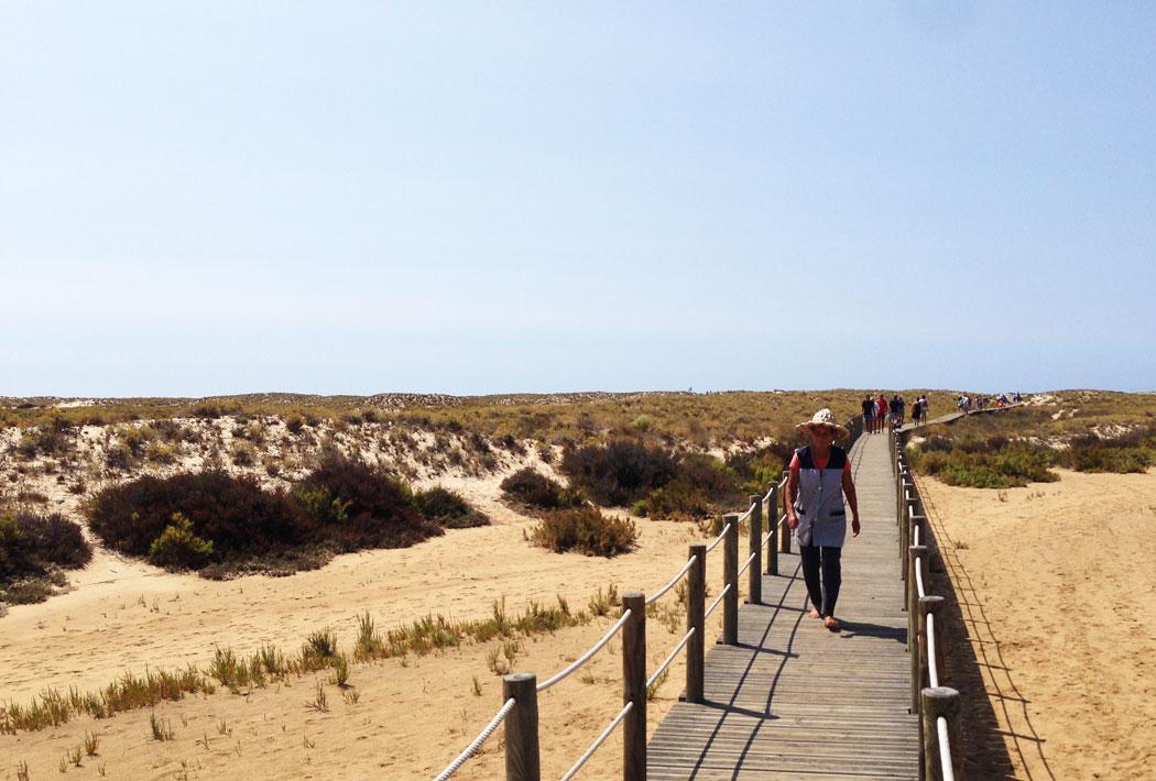 caillebotis-praia-culatra-daily-algarve